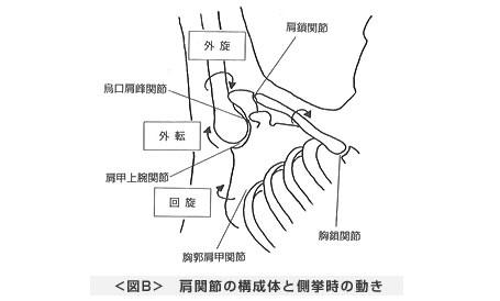 肩関節の構成体と側挙時の動き