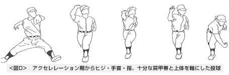 アクセレレーション期からヒジ・手首・指、十分な肩甲帯と上体を軸にした投球