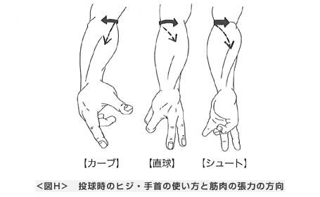 投球時のヒジ・手首の使い方と筋肉の張力の方向