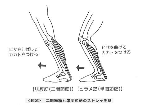 二関節筋と単関節筋のストレッチ例