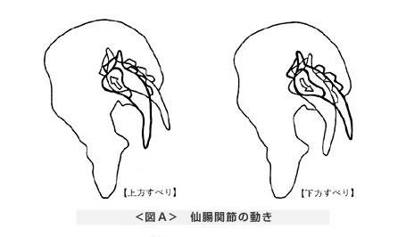 仙腸関節の動き