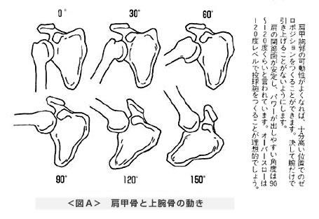肩甲骨と上腕骨の動き